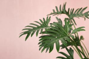 pinkplant_1.png